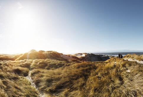 Denmark, Henne Strand, Dune landscape - BMA000205
