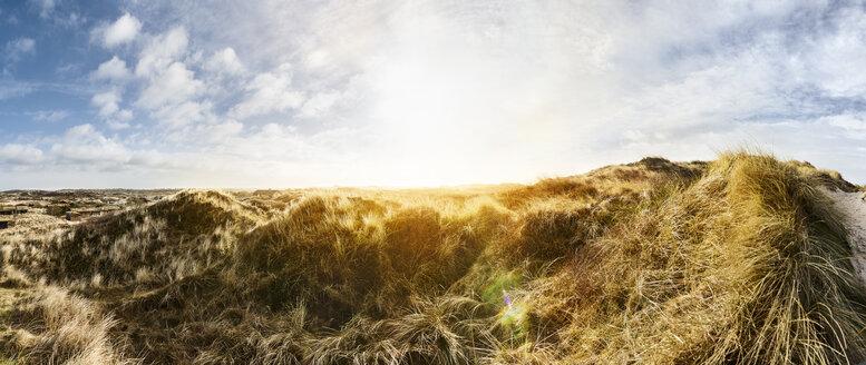 Denmark, Henne Strand, Dune landscape - BMA000211