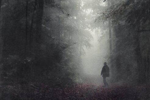 Silhouette of man walking in the autumnal forest at haze - DWIF000706
