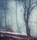 Forest on a foggy winter's day - DWIF000709