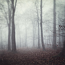 Winter forest on a foggy day - DWI000712