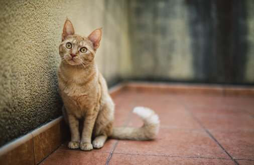 Cat sitting on a terrace - RAEF000960