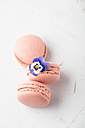 Three pink Macarons and a Horned Violet - MYF001438