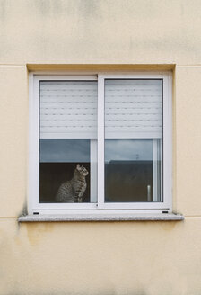 Tabby cat sitting behind window of a residential house - RAEF000963