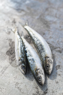 Raw sardine fishes - DEGF000770