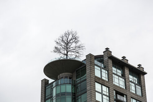 Canada, British Columbia, Vancouver, High-rise residential building with tree on roof terrace - NGF000311