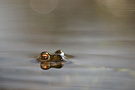 Peeking Common toad in water - MJOF001156