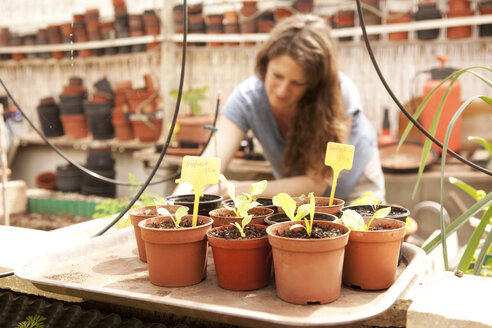 Seedlings in flowerpots with woman gardening in greenhouse - MFRF000510