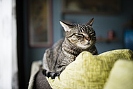 Portrait of twinkling cat lying on backrest of couch - RAEF000980