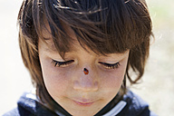 Portrait of little boy with ladybird on his nose - VABF000388