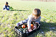 Boy sitting on meadow with basket full of vegetables - VABF000408