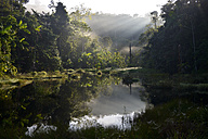 Brazil, Para, Amazon rainforest, pond in the morning - FLKF000664