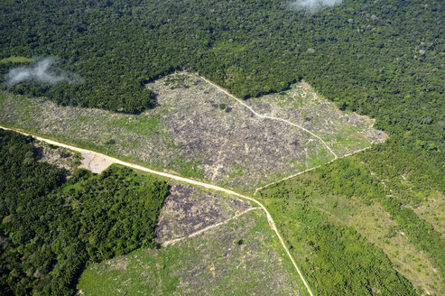 Brazil, Para, Itaituba, Amazon rainforest, slash and burn, reclamation of pastureland - FLKF000685