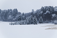 Germany, Bavaria, Snow covered forest at the Isar Valley - TCF004937
