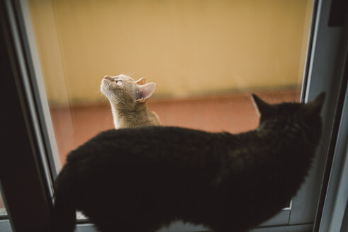 Two cats separated by a window - RAEF001079