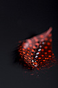 Red feather and water drops, close-up - JUNF000521