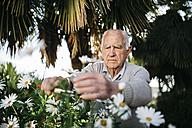 Portrait of senior man working in the garden - JRFF000577