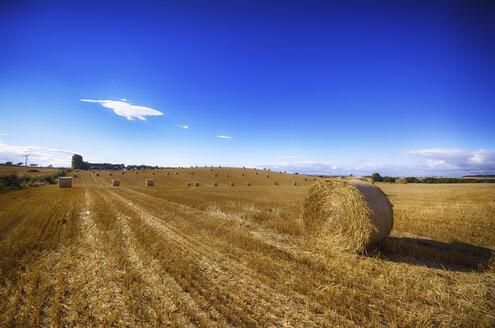 Scotland, East Lothian, hay bales on field - SMAF000462