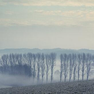Gernany, North Rhine-Westphalia, Morning fog over fields - DWIF000732