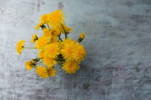 Bunch of dandelions - MYF001467