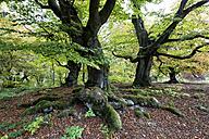 Germany, Hesse, Kellerwald National Park - KLR000305
