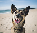 Portrait of mongrel on the beach - RAEF001138