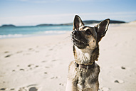 Portrait of mongrel on the beach - RAEF001144