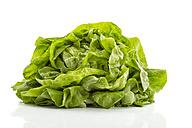 Butterhead lettuce - MAEF011486