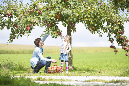 Little girl and father picking apples from tree - MAEF011608