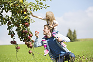 Little girl picking an apple from tree, girl sitting on shoulders of the father - MAEF011611