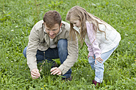 Father and daughter picking wildflowers in meadow - MAEF011625