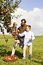 Father with two sons harvesting apples on rural meadow - MAEF011637