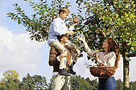 Family picking apples from tree - MAEF011640