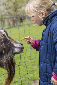 Blond little girl stroking pygmy goat - JFEF000785