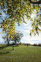 Germany, Lake Chiemsee, Seebruck, trees at the lakeside - HAMF000192