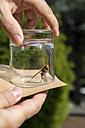 Man releasing an hornet - MIDF000722