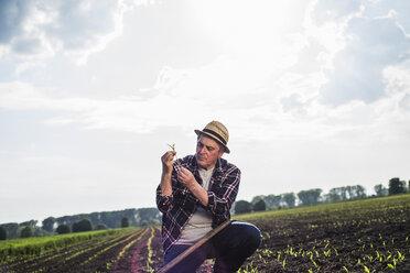 Farmer in a field examining crop - UUF007344