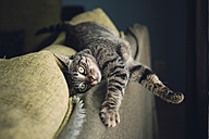 Tabby cat relaxing on a couch - RAEF001166