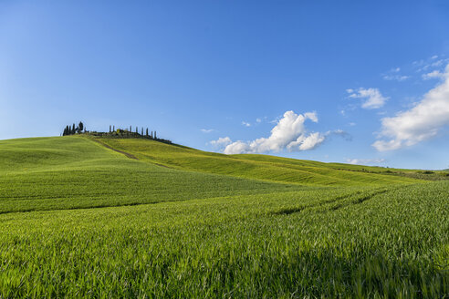 Italy, Tuscany, Val d'Orcia, farmhouse and fields in spring - LOMF000270