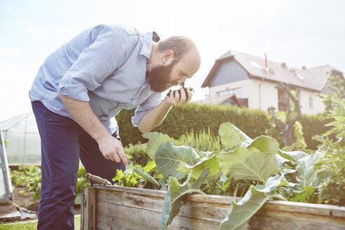 Young man working in garden, smelling fresh soil - SEGF000551