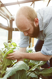 Young man working in green house - SEGF000554