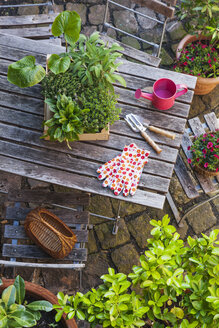 Gardening, different medicinal and kitchen herbs and gardening tools on garden table - GWF004706