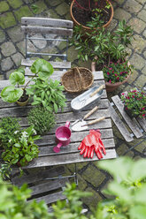 Gardening, different medicinal and kitchen herbs and gardening tools on garden table - GWF004709