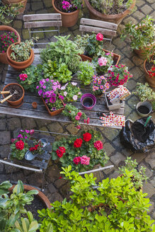 Gardening, different medical and kitchen herbs and gardening tools on garden table - GWF004712