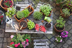 Gardening, different medicinal and kitchen herbs and gardening tools on garden table - GWF004715