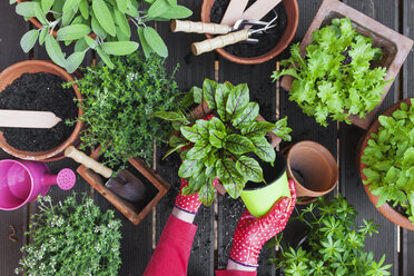 Gardening, medicinal and kitchen plants - GWF004718