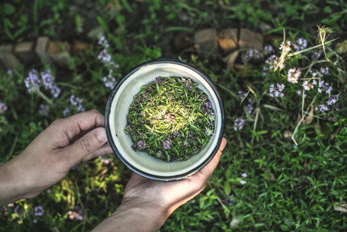 Woman's hands holding bowl of freshly picked thyme - DEGF000813
