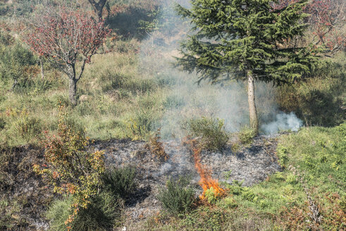 Sicily, Provincia di Messina, traditional forest fire - HWOF000103