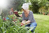 Woman gardening - FMKF002739