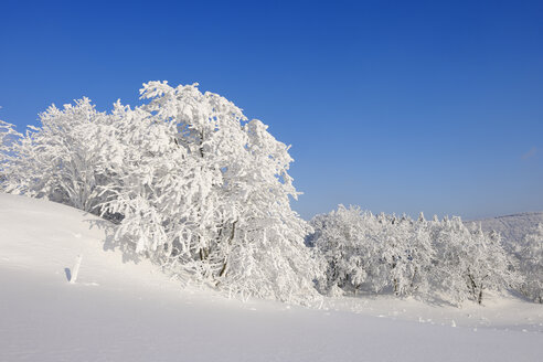 Germany, snow-covered trees in winter landscape - RUEF001706